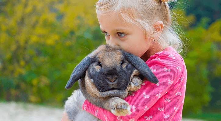 Pocket Pet Care
